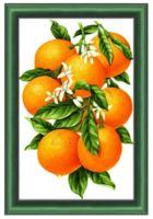 """Алмазная вышивка-мозаика """"Гроздь апельсинов"""" (300х470 мм)"""