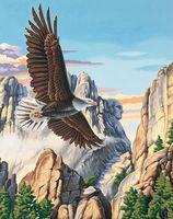 """Картина по номерам """"Парящий орел"""" (410х510 мм; арт. 91301-DMS)"""