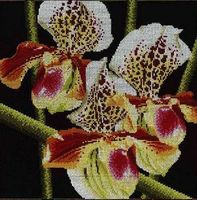 """Вышивка крестом """"Орхидеи Пафиопедилум"""""""