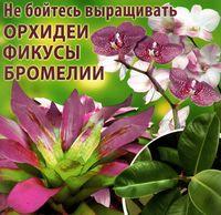 Не бойтесь выращивать орхидеи, фикусы, бромелии