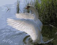 "Картина по номерам ""Красавец лебедь"" (400х500 мм)"