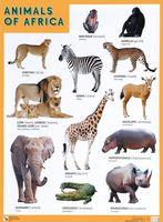Animals of Africa. Плакат