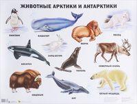 Животные Арктики и Антарктики. Плакат
