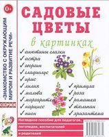 Садовые цветы в картинках