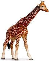 "Фигурка ""Жираф"" (13 см)"