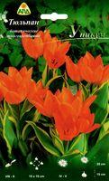 """Тюльпан ботанический многоцветковый """"Уникум"""""""