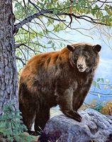 """Алмазная вышивка-мозаика """"Бурый медведь"""" (380х480 мм)"""