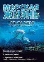 Морская жизнь. Черное море - экология моря, биология морских организмов