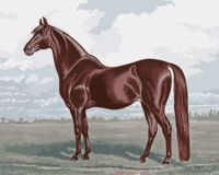 "Картина по номерам ""Бархатный конь"" (400х500 мм)"