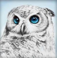 "Алмазная вышивка-мозаика ""Взгляд совы"" (250х250 мм)"