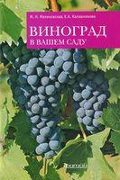 Виноград в вашем саду