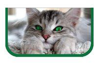 """Пенал средний """"Зеленоглазый кот"""""""