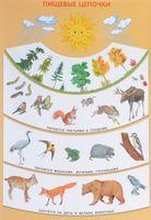 Пищевые цепочки. Плакат