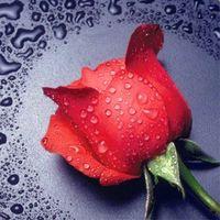 """Алмазная вышивка-мозаика """"Красная Роза"""""""