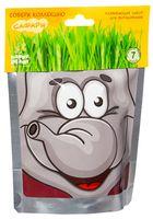 """Набор для выращивания растений """"Сафари. Слон"""""""